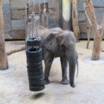 Elephant eating in the Schönbrunn Zoo